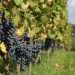 Weingut Cobenzl punktet bei Biosphärenpark Wienerwald-Weinwettbewerb