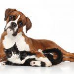 Hunde- und Katzenfleisch-Verbot für Taiwanesen!