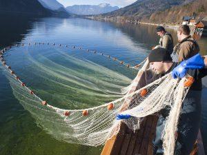Fischer beim Einholen des Netzes am Grundlsee (c) Wolfgang Simlinger