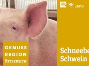 noe_RT_Schneeberg_Schwein_250x200cm_261108.indd
